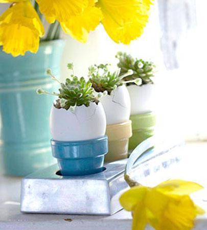 plantera växter i äggskal